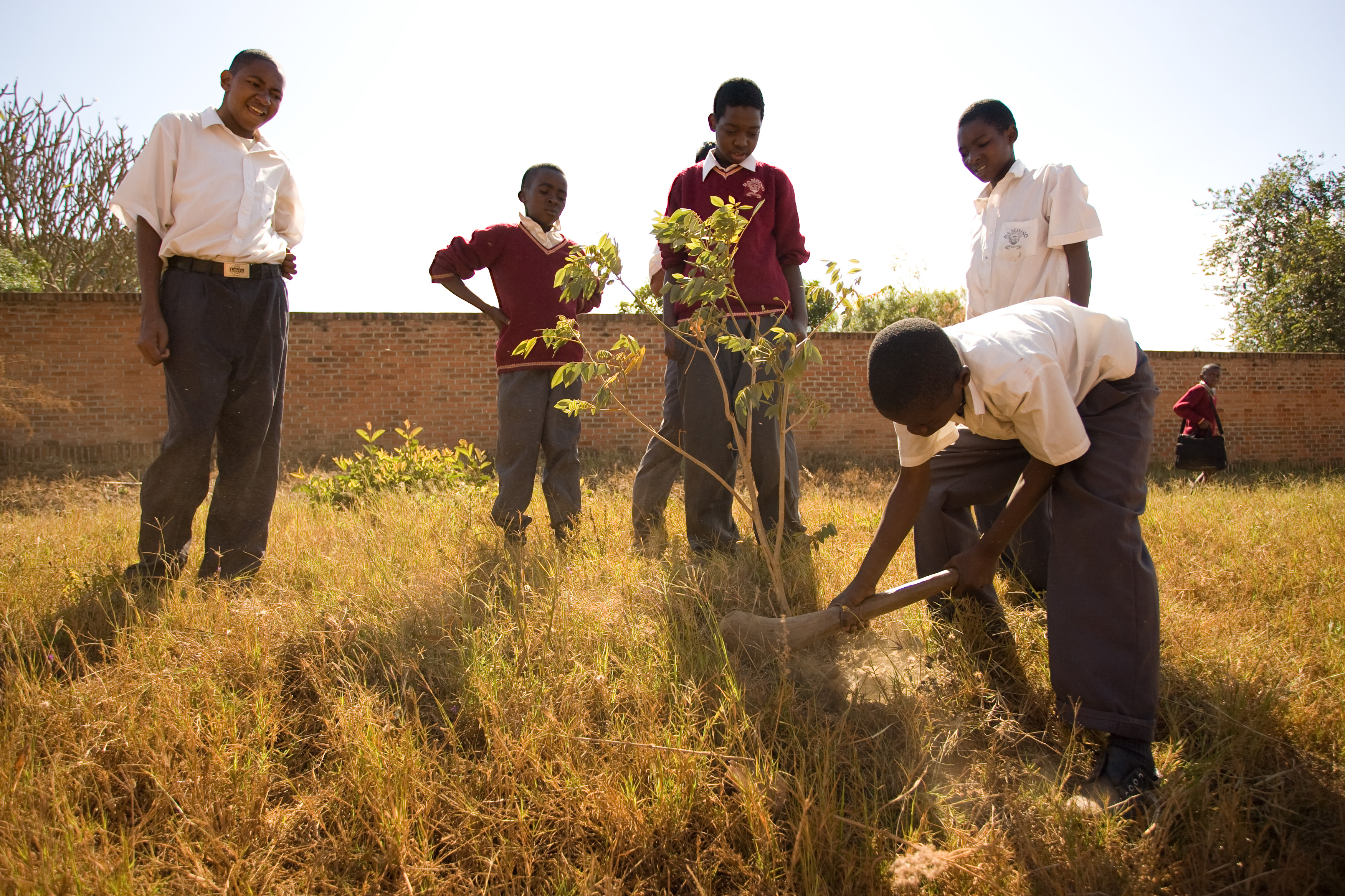 Students at Bambino School, a Bahá'í-inspired school in Lilongwe, Malawi plant a tree outside the school as part of a service project